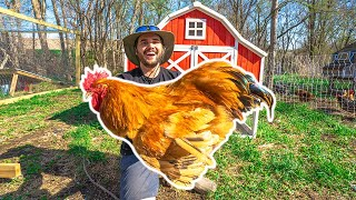 I Bought a GIANT ROOSTER for My BACKYARD FARM!!!