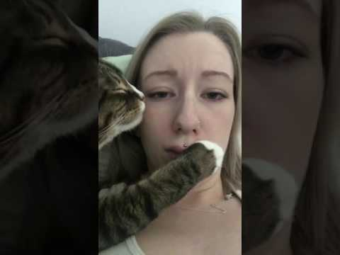 Cat Awkwardly Touches Owner