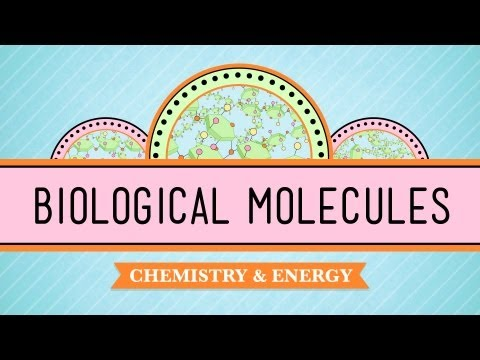 Biological Molecules - You Are What You Eat: Crash Course Biology #3