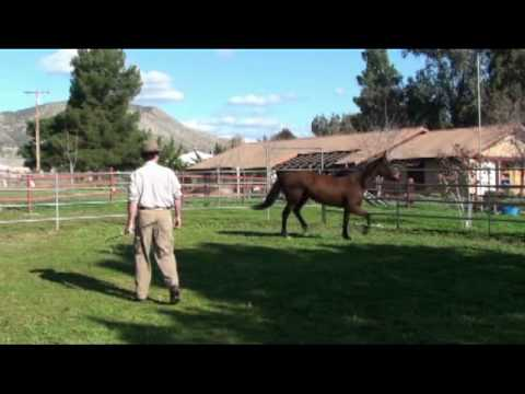 Getting the horse to move and turn in the round pen - LINCOLN KINNEY - Horsemanship Out West, Part 6