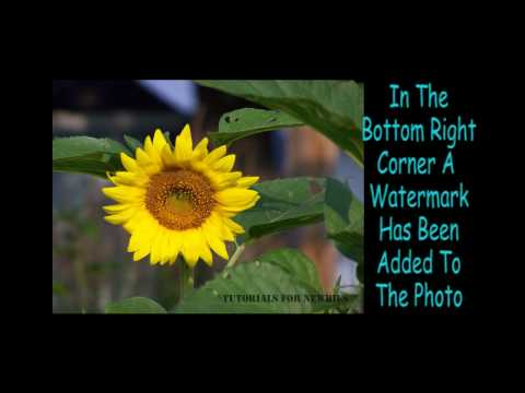 How to watermark photos in Elements 7
