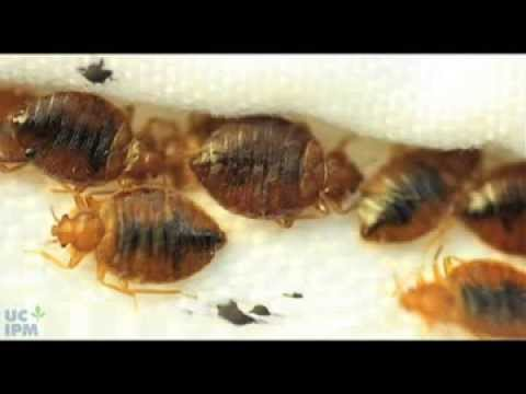 How to use a bed bug detector