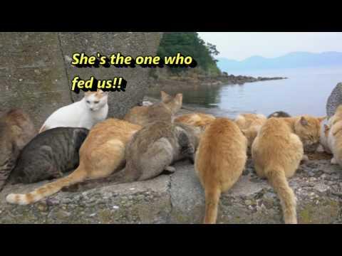 Visiting Cat Island Aoshima 青島! Cats EVERYWHERE!!!! Japan Trip S01E05