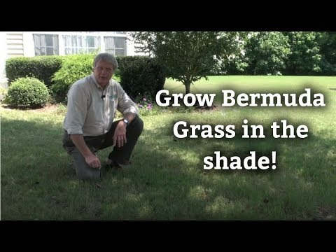 Growing Bermuda Grass In Shade - Warm Season Turf Tips