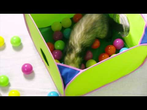 Marshall Pet Pop-N-Play Ball Pit & Super Thru-Way