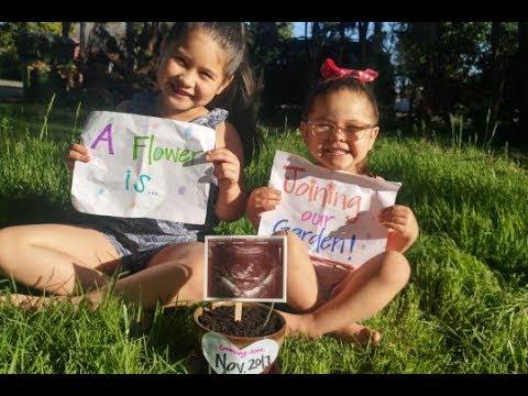 Pregnancy Update (13 wks) + Pregnancy Announcement