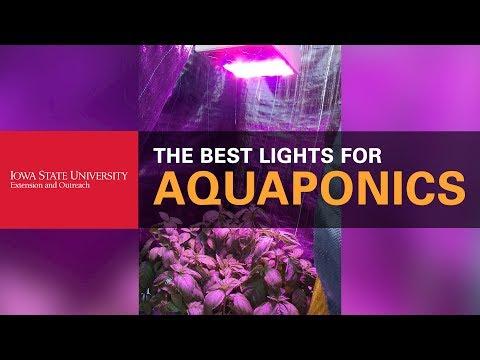 Choosing the Best Lights for Aquaponics