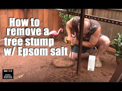 How to: Killing, Removing, rotting out tree stumps w/ Epsom Salt (environmentally better)