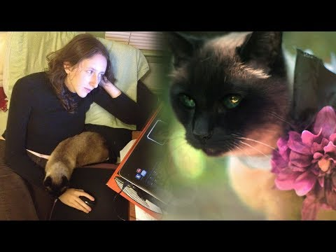 A Tribute to Our Beloved Cat Desdemona
