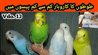 How to Start a Business about Australian Parrots in cheap Price in urdu/Hindi |Arham Naveed| Vdo. 13