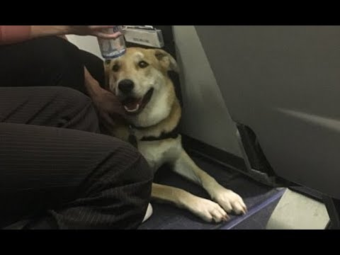 Girl injured by emotional support dog on Southwest flight