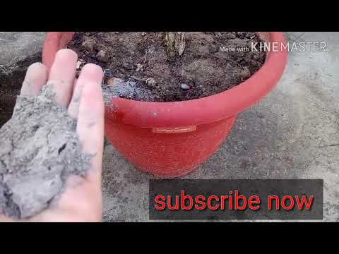 How to remove ants from plants | organically remove plant's