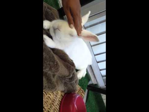 How to make a bunny sleep