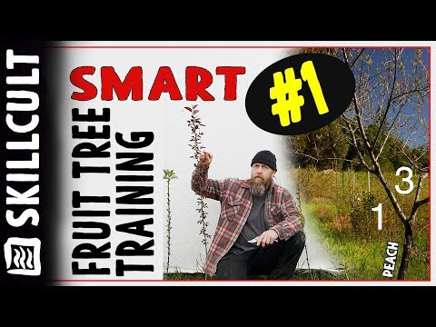 Smart Fruit Tree Training #1: One Year Whips or Maidens, Disbudding and Notching