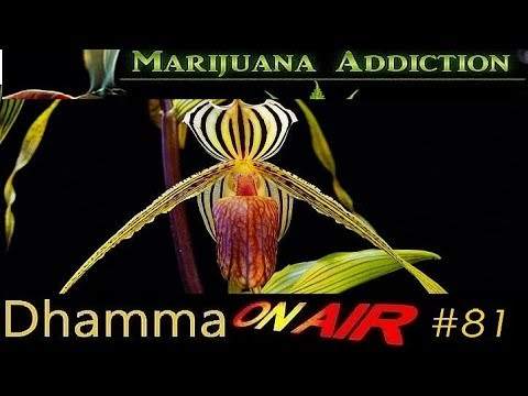 Dhamma on Air #81: Marijuana Addiction