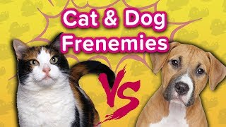 Cats & Dogs: Friends or Enemies? // Funny Animal Compilation