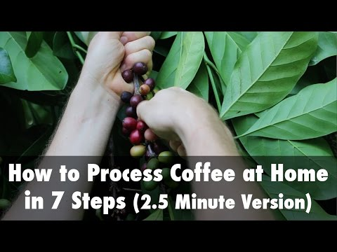 How to Process Coffee at Home in 7 Steps (2.5 Minute Version)