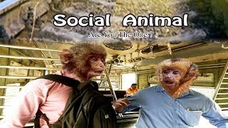 Social Animal | Are You The One?| Short Film Hd By Sambhawamhi Films