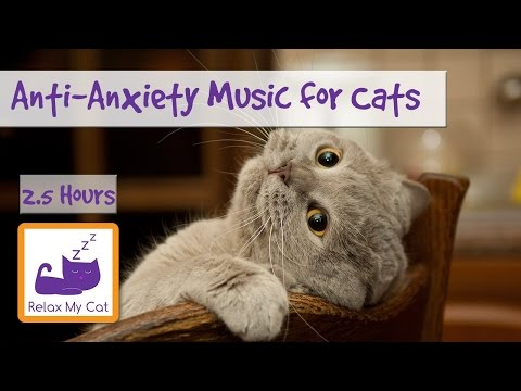 Anti-Anxiety Music for Cats and Kittens! Soothe your Cat with our Relaxation Music! 🐱 #ANXIETY05