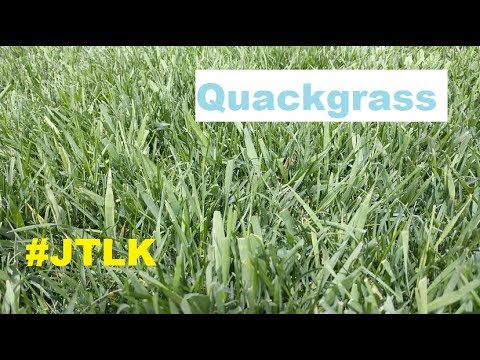 Spring Lawn Stuff + How to Get Rid Of Quackgrass