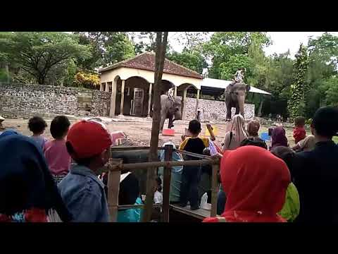 Gembira Loka Zoo - 101217