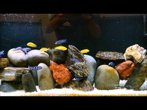Faster Way To Add Aquarium Salt To Your Aquarium   African Cichlid   Tropical Fish