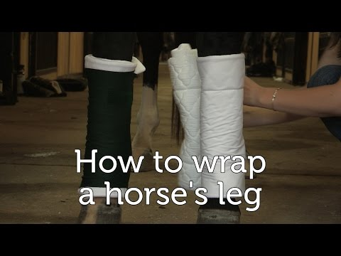 How to wrap a horse's legs