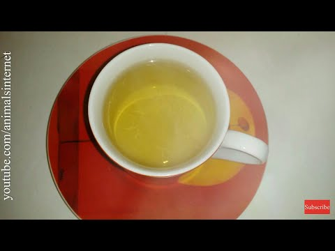How to make chamomile Lord Nelson LIDL tea properly step by step. 4K UHD 2160p