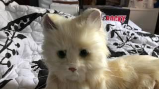 Serene - My Hasbro Joy For All Cat - PakVim net HD Vdieos Portal
