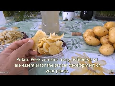 How to Make Organic Fertilizer at Home | Homedade Fertilizer | with Potato Peels