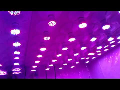 Esavesbulbs from eBay.ca ,E27 FULL SPECTRUM LED GROW LIGHT BULBS!!!!!, BLURPLE LIGHTS!!!!!