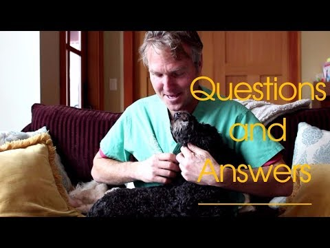 Dog and Cat Health Questions and Answers