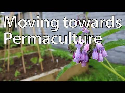 Transitioning Towards Permaculture - What and Why?