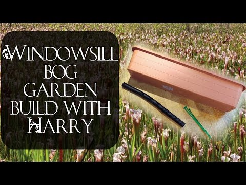 Windowsill bog garden build with Harry (Part 1)
