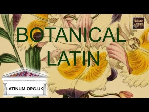 Botanical Latin - The Noun and First Declension
