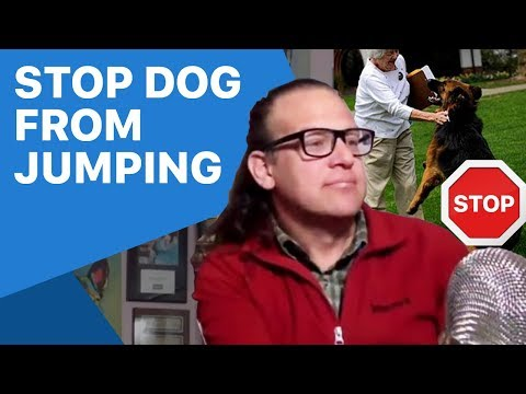 How to stop a jumping dog, dog training tips. Stopped in 1 second.