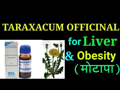 Taraxacum officinale for mouth, and liver swelling, hardness in liver, obesity problems in brief.