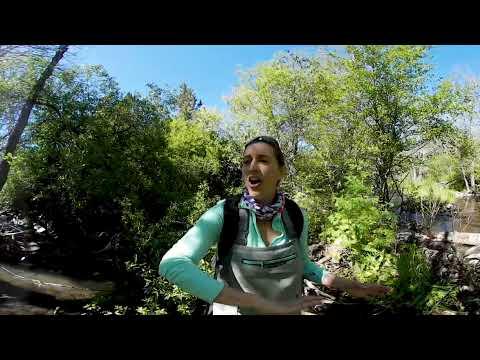UC Davis in 360 Degree Video: The Little Shasta River