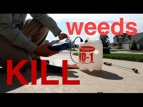 How To Kill Weeds In The Lawn : Spraying Weeds
