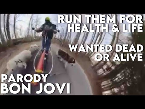 run my husky dog for healthy life - senior husky dog health - husky dog lover must watch