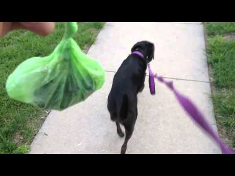How to pick up dog poop.