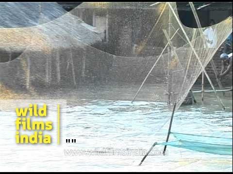Man prepares to cast fishing net in flood waters - Assam