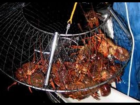 What's the best crab net for pier fishing? Promar Eclipse hoop net