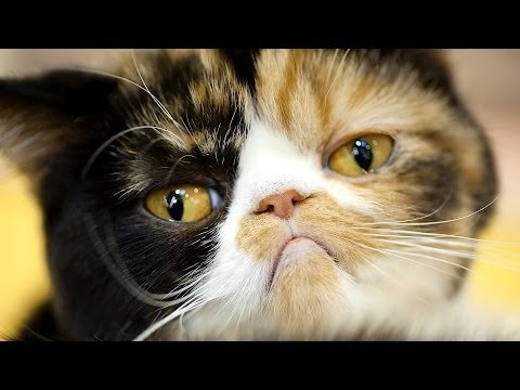 How to Know If Your Cat Is Sick | Cat Care