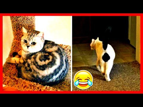 Cats With The Craziest Fur Markings Ever