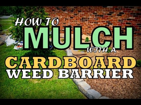 Cardboard Weed Barrier For Mulching