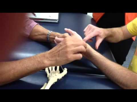 Wrist/hand bone palpations