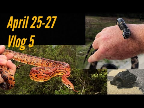 Herping the North Carolina Coastal Plains for Snakes and turtles in April