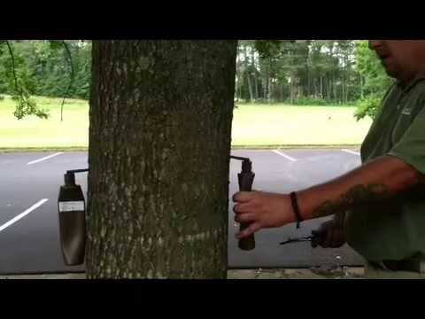 Tree disease treatment and deep root injection