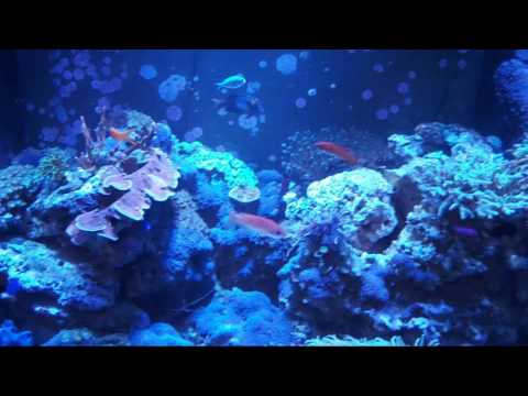 How to clean fish tank glass (outside)